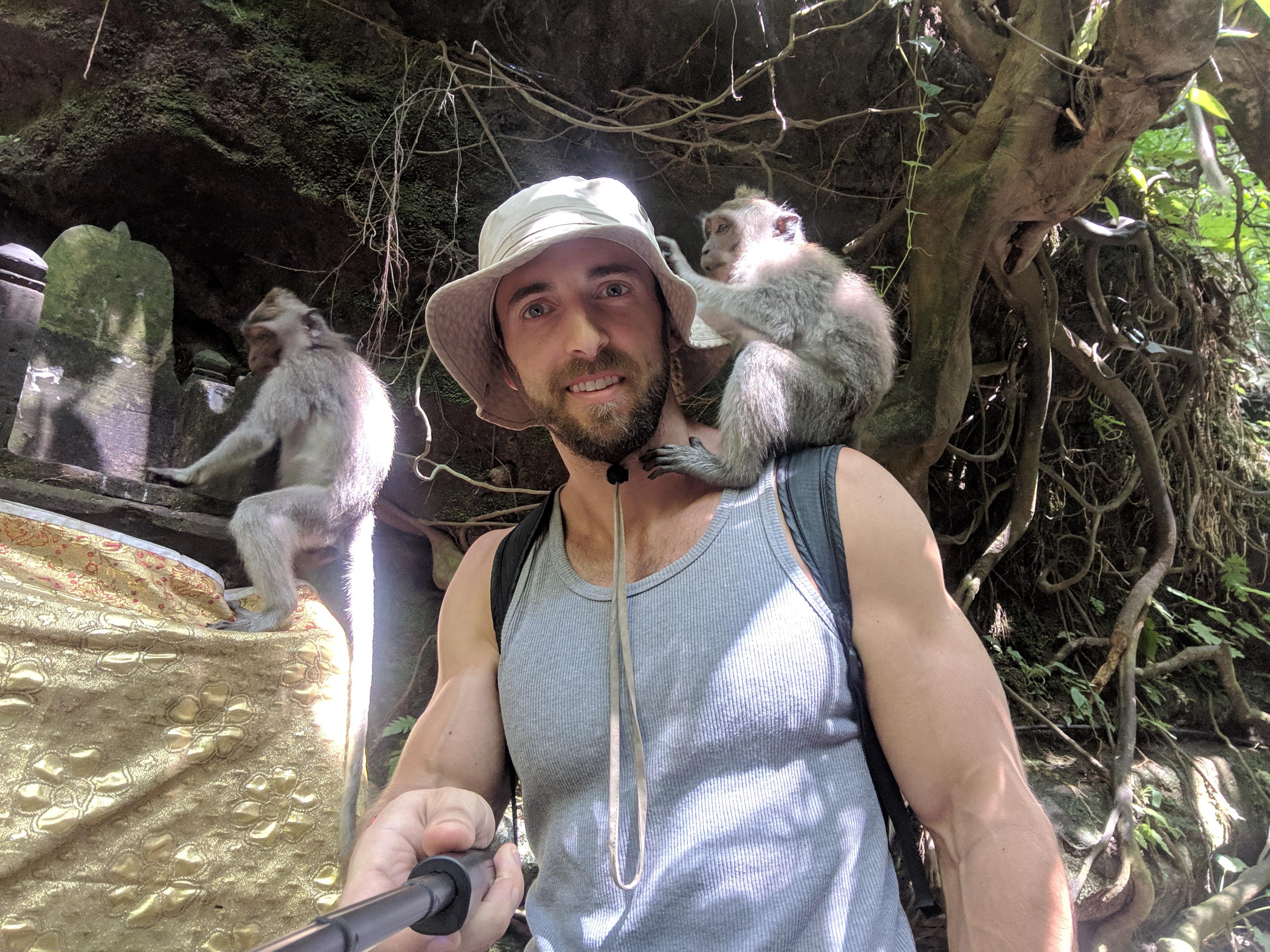 real monkey forest ubud bali