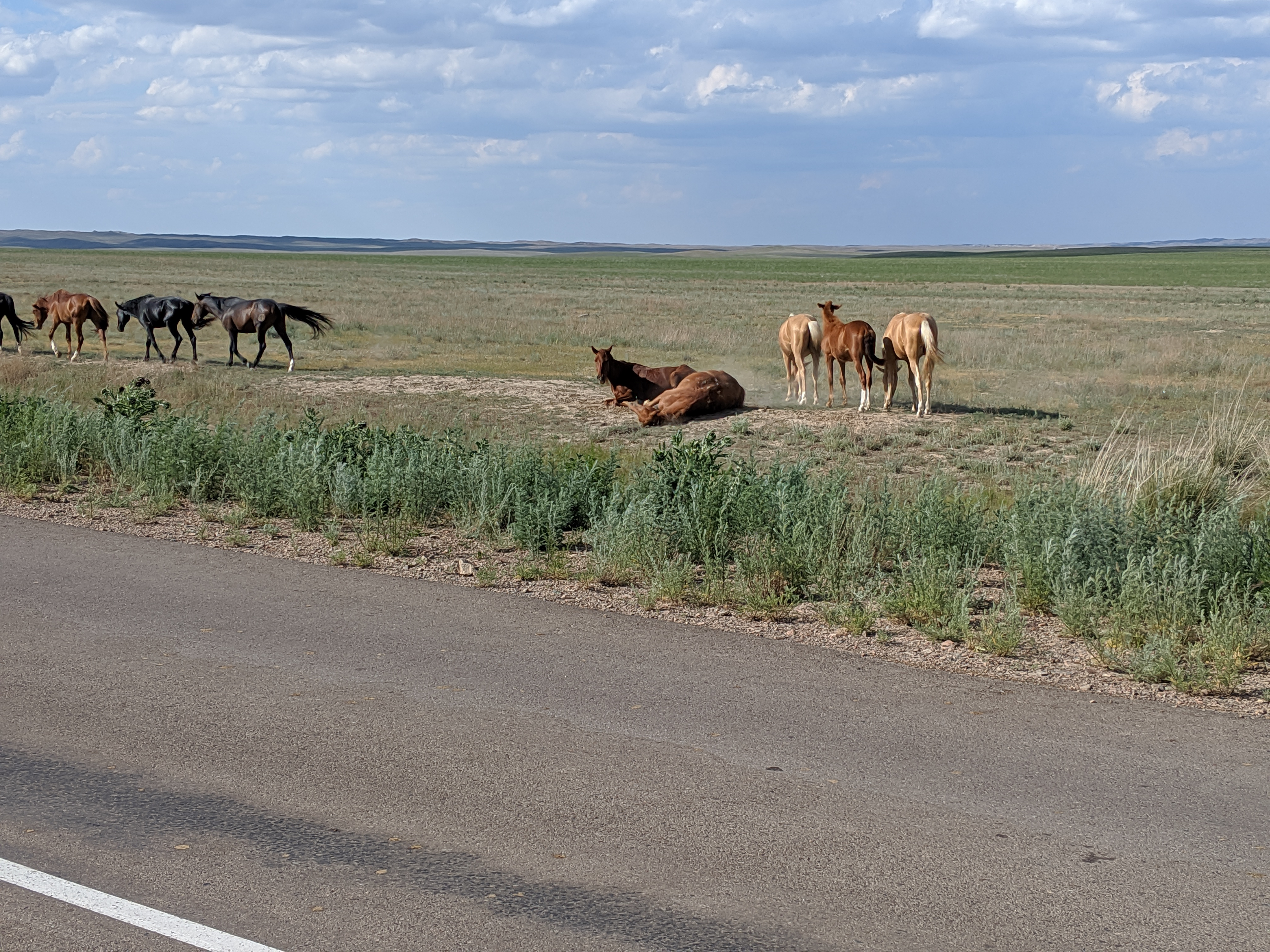 Guide to tamgaly, kazakhstan wild horses