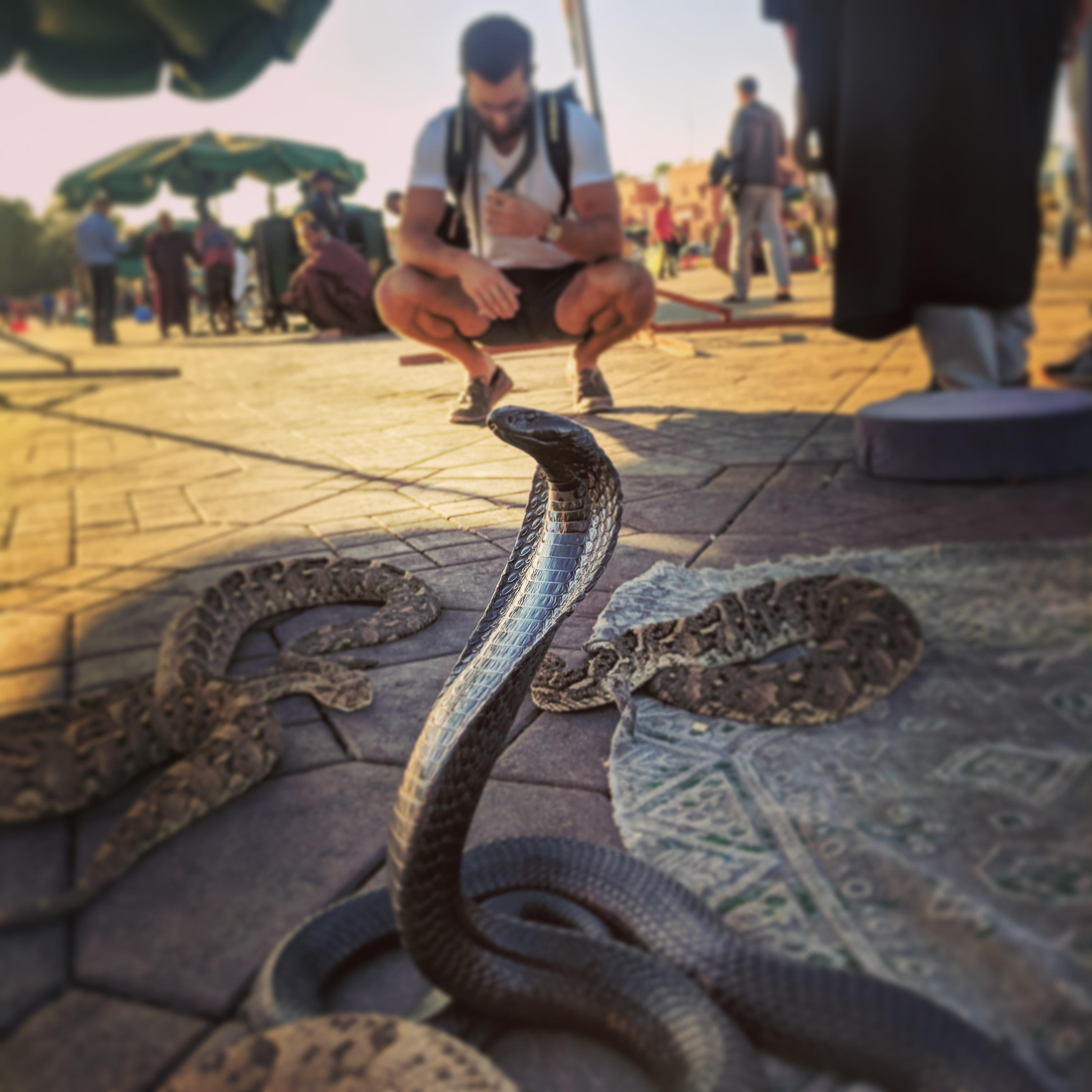 marrakech morocco snakes