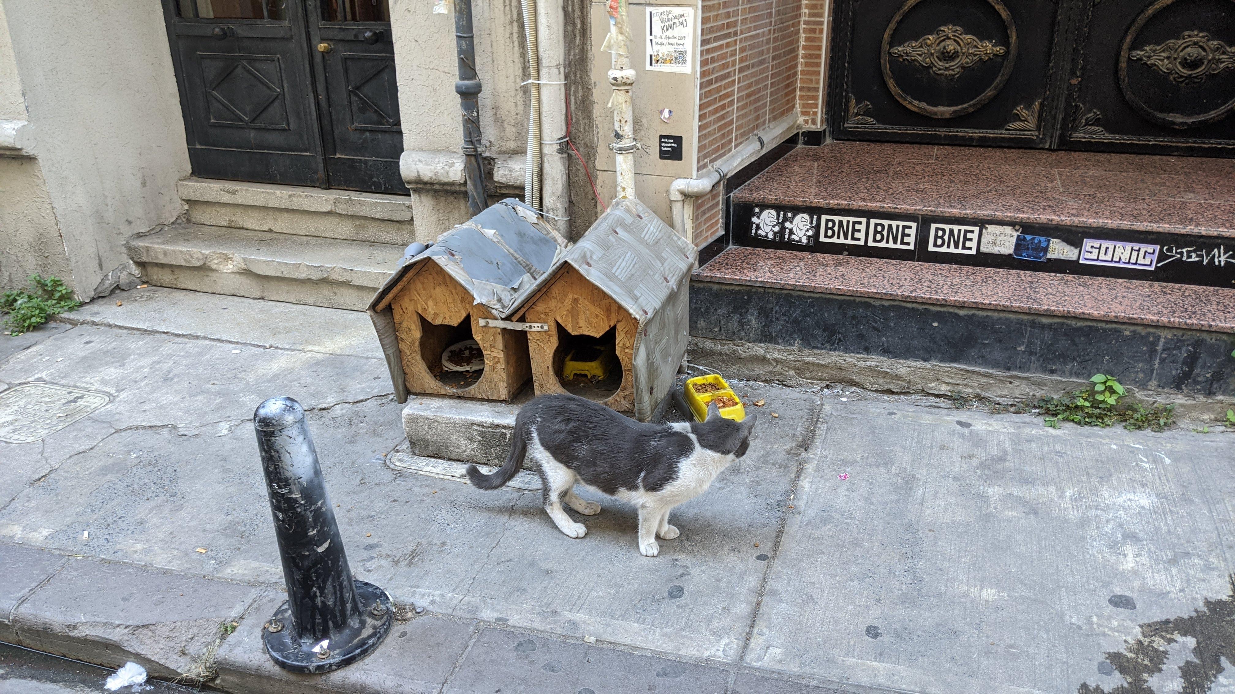 street cat house istanbul turkey